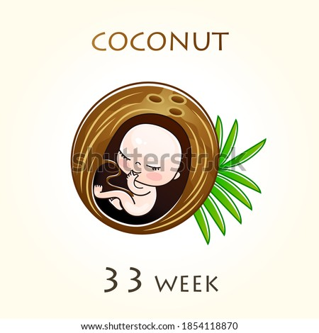Stages of development of pregnancy, the size of the embryo for weeks. Human fetus inside the uterus. 33 week of 42 weeks of pregnancy. Vector illustrations coconut