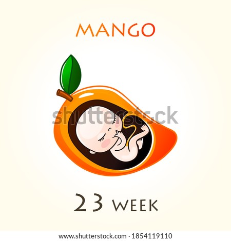 Stages of development of pregnancy, the size of the embryo for weeks. Human fetus inside the uterus. 23 week of 42 weeks of pregnancy. Vector illustrations mango