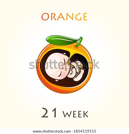 Stages of development of pregnancy, the size of the embryo for weeks. Human fetus inside the uterus. 21 week of 42 weeks of pregnancy. Vector illustrations orange