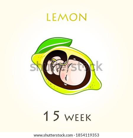 Stages of development of pregnancy, the size of the embryo for weeks. Human fetus inside the uterus. 15 week of 42 weeks of pregnancy. Vector illustrations lemon