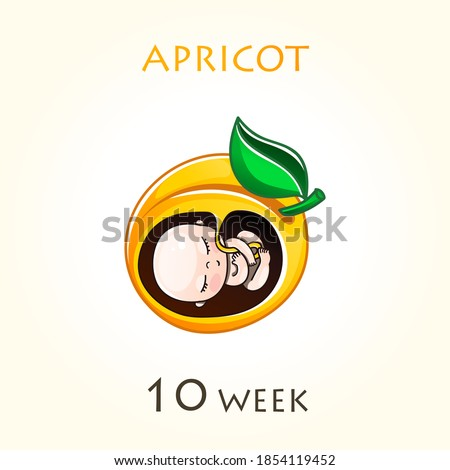 Stages of development of pregnancy, the size of the embryo for weeks. Human fetus inside the uterus. 10 week of 42 weeks of pregnancy. Vector illustrations apricot