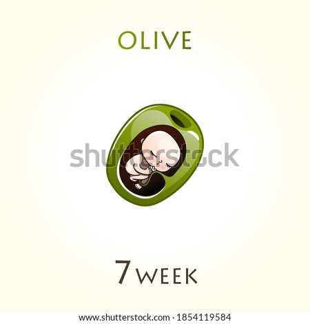 Stages of development of pregnancy, the size of the embryo for weeks. Human fetus inside the uterus. 7 week of 42 weeks of pregnancy. Vector illustrations olive