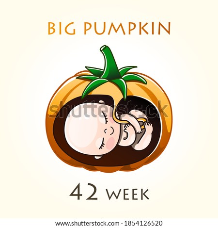 Stages of development of pregnancy, the size of the embryo for weeks. Human fetus inside the uterus. 15 week of 42 weeks of pregnancy. Vector illustrations pumpkin