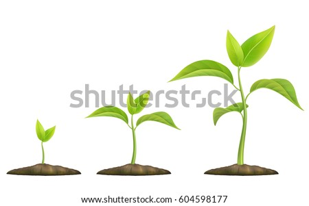 Stages of plant growth. Green sprout grows from the ground. Realistic vector illustration. It symbolizes life and development and ecology.