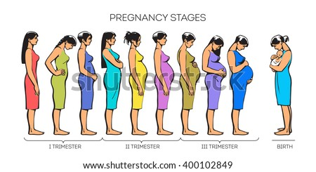 Stages Of Pregnant Women