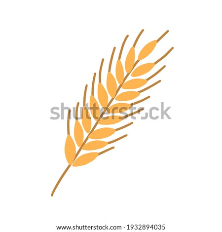 Stalk of rye ear or spikelet with seeds, grains and spikes isolated on white background. Colored flat vector illustration of ripe corny or cereal crop Сток-фото ©