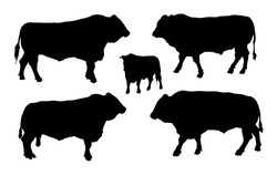 Standing adult bull vector silhouette illustration isolated on white background. Buffalo, bull group collection. Domestic animal. Farm animal. Organic food. Mythology creature.