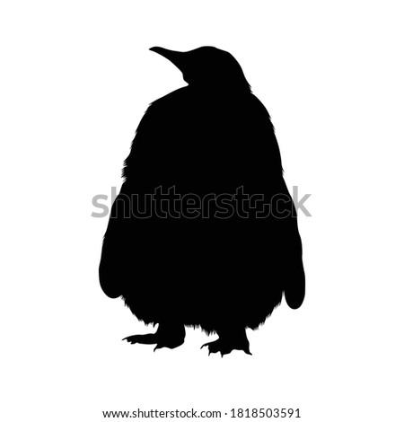 standing king penguin