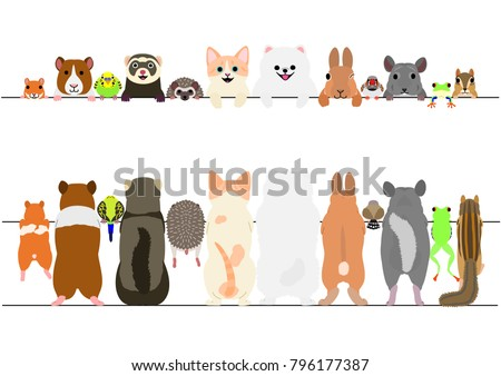 standing pet animals front and