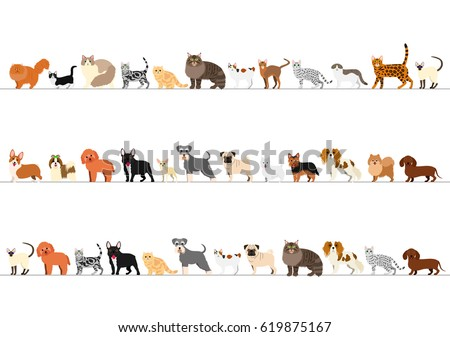 standing small dogs and cats
