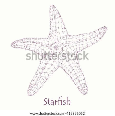 starfish  engraving style ink