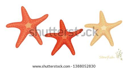starfish vector set for summer