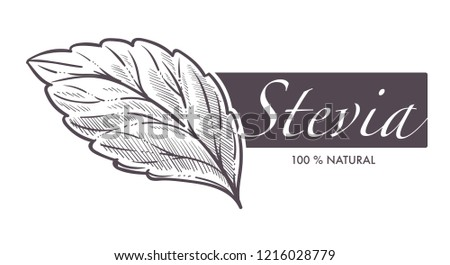 Stevia natural sweetener, leaf put in drink cup vector. Monochrome sketch outline with sweet substitute of sugar, tea beverage. Plant used to naturally increase sweetness of liquid poured in mug #1216028779