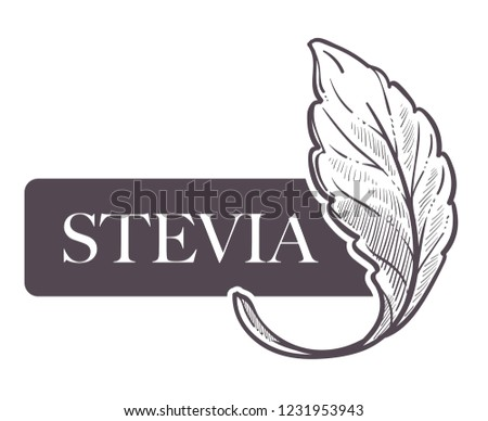 Stevia natural sweetener, leaf put in drink cup vector. Monochrome sketch outline with sweet substitute of sugar, tea beverage. Plant used to naturally increase sweetness of liquid poured in mug #1231953943