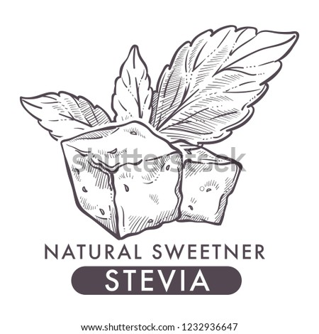 Stevia natural sweetener, leaf put in drink cup vector. Monochrome sketch outline with sweet substitute of sugar, tea beverage. Plant used to naturally increase sweetness of liquid poured in mug #1232936647