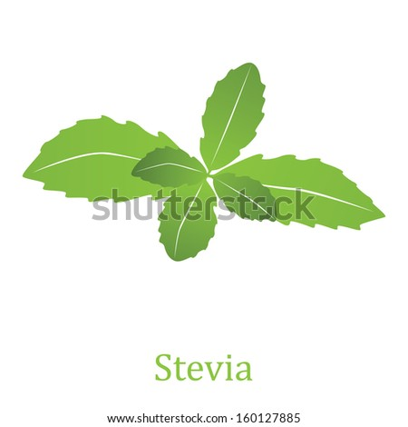 Stevia rebaudiana, sweetleaf sugar substitute isolated on white background (Vector illustration)