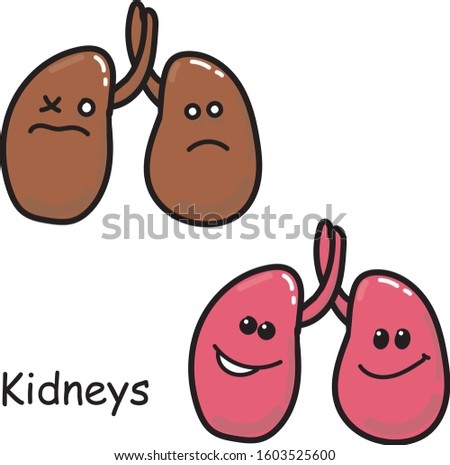 Stock illustration. Vector image of the internal organs of the kidney Isolated on a white background. Drawing in cartoon style medicine for children. comparison of sick and healthy kawaii organ