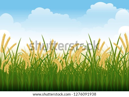 stock vector illustration of rice field, paddy, rural summer landscape graphic illustration