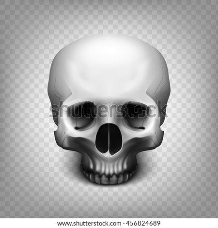 66444ff4b32 Stock vector illustration realistic human skull isolated on a transparent  background. Shades of gray.