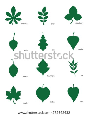 stock vector illustration set