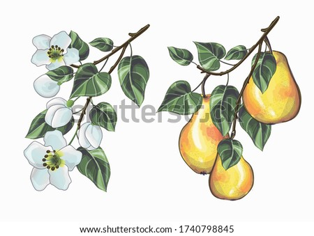 stock vector illustration two