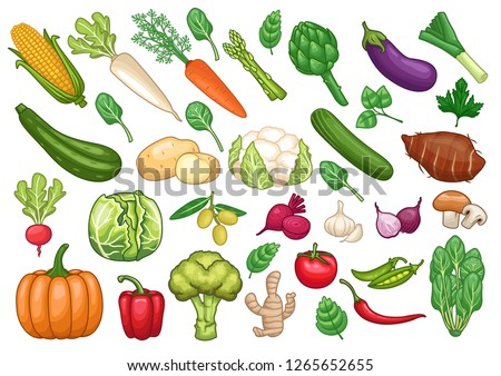 stock vector set of vegetables graphic object illustration