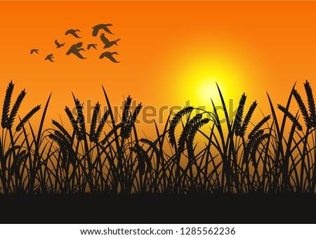 stock vector silhouette flying