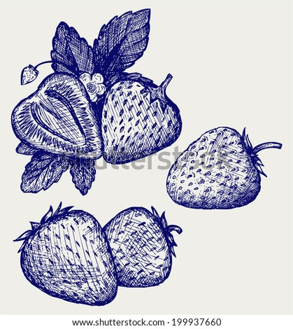 Strawberries with leaves. Doodle style