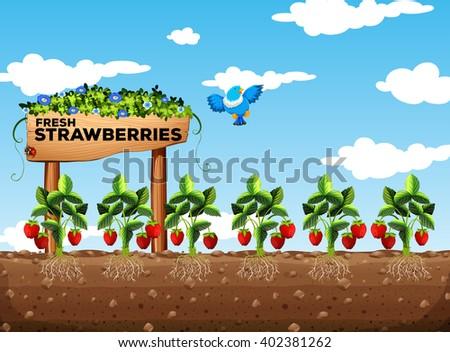 Strawberry Clip Art Free Vector 4vector