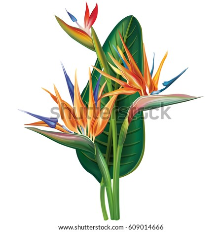 strelitzia reginae  bird of