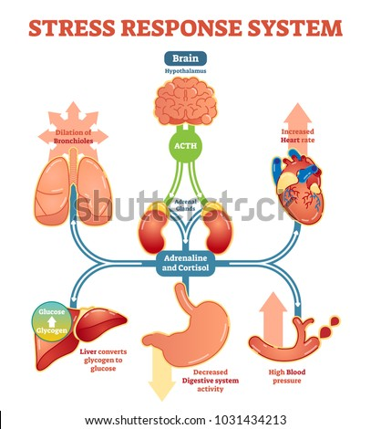 Stress response system vector illustration diagram, nerve impulses scheme. Educational medical information.