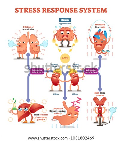 Stress response system vector illustration diagram, nerve impulses scheme. Educational medical information. Expressive cartoon characters.