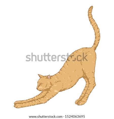 Stretching Cat. Vector Cartoon Brown Feline Illustration