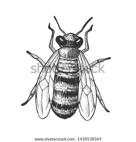 striped bee flying insect