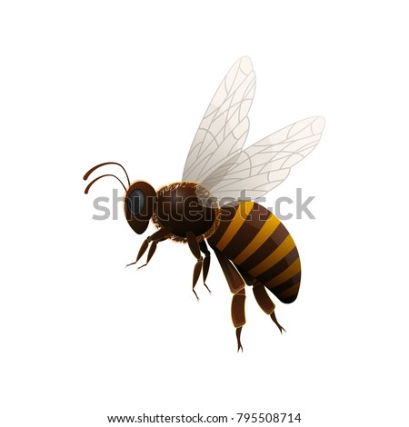 striped flying honey bee side