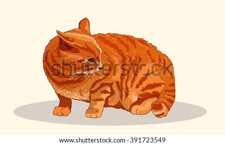 striped red cat sits fluffed