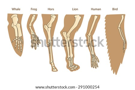 structure forelimb of mammals