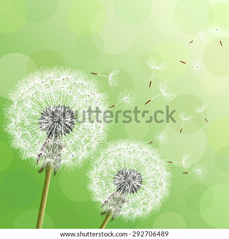 Stylish modern nature background with two flowers dandelions and flying fluff. Trendy floral green background with place for text. Abstract beautiful spring or summer wallpaper. Vector illustration