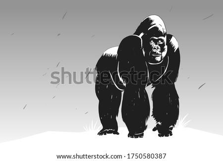 stylish stencil gorilla for