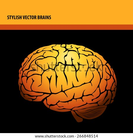 stylish vector isolated brains