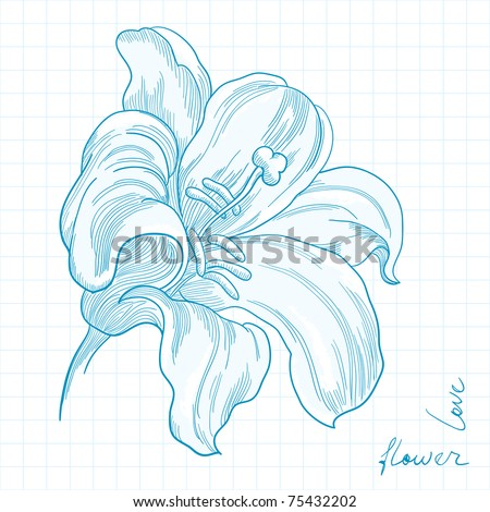 stock vector stylized copybook drawing of lily flower vector