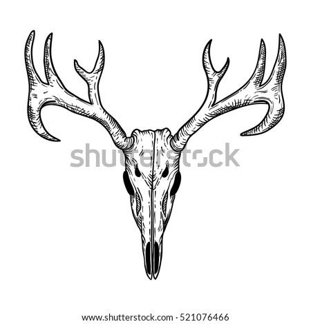 stylized deer skull sketch hand