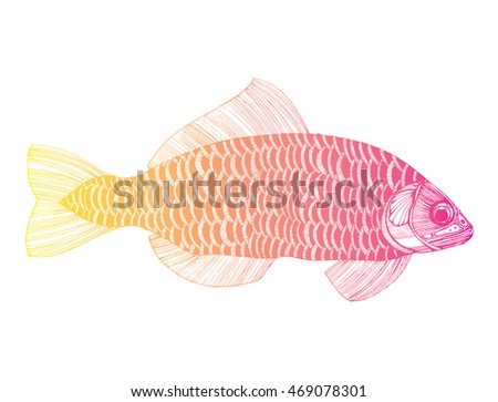 Fish Of The Carp Family  Letters