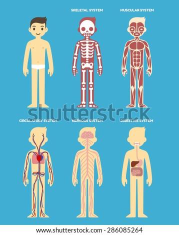 stylized human body anatomy