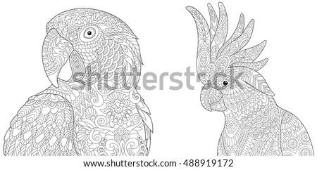 stylized macaw  arara  and