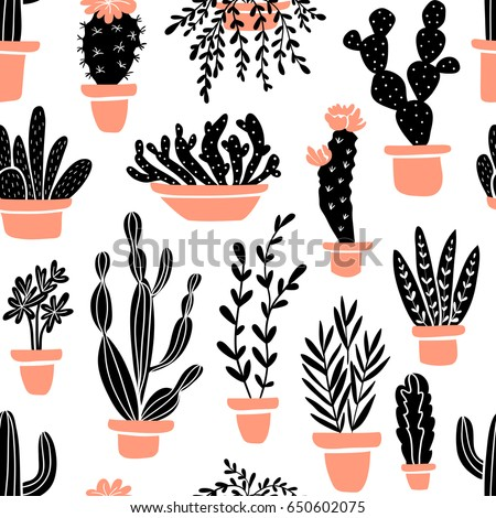 succulents and cacti plants