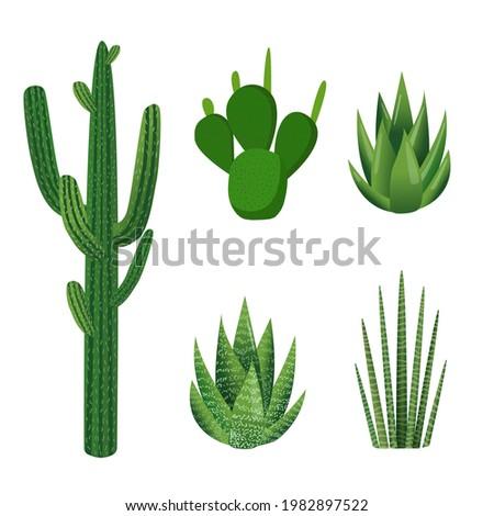 succulents set of green plants