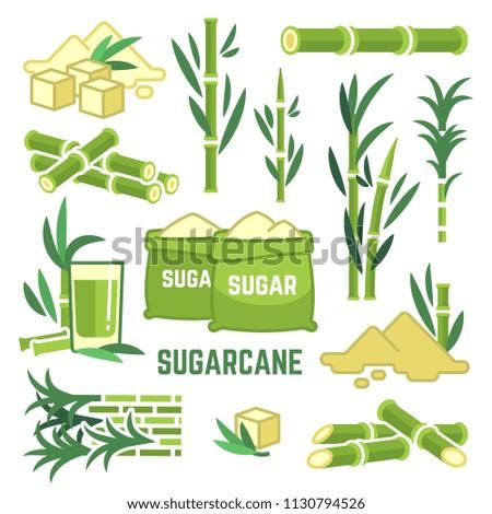 Sugar plant agricultural crops, cane leaf, sugarcane juice vector icons. Sugar cane, sweet plant, natural green stem illustration