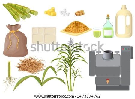 Sugarcane and its various derivatives derived from processing. Cane sugar, a bag of sugar, granulated sugar, rum. Machine for squeezing syrup. Isolated on a white background.