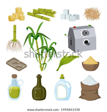 Sugarcane and products thereof. Processing. Plant reed and its parts. Cane sugar, sugar cubes, bag of sugar, rum, syrup. Assembly for syrup extraction. Set of isolated objects on white background